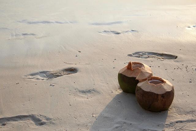 אגוז קוקוס על החוף