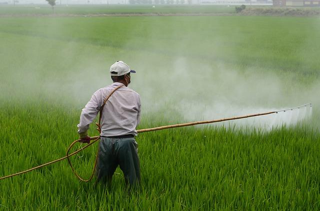 השקיית שדה אורז